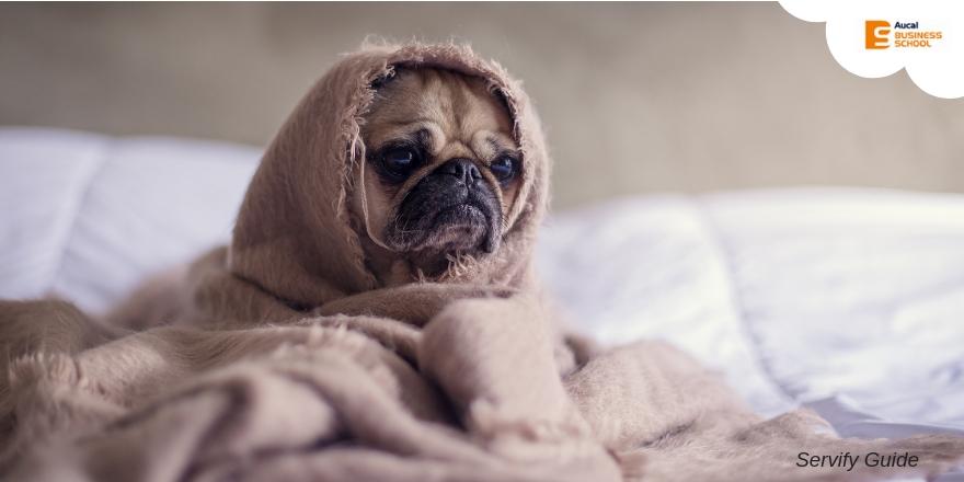 ¿Qué dice la ley sobre prohibir mascotas en un piso de alquiler?